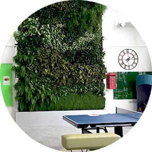 Living walls for offices and commercial buildings