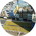 green roofs to create green space
