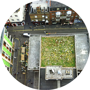 Green roofs for urban greening