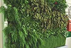 Designers & Installers of Living Walls