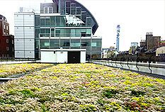 Green Living Roofs by Landmark Living Roofs