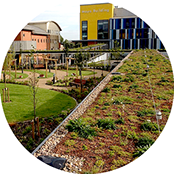 Green roofs and living walls in London and the UK